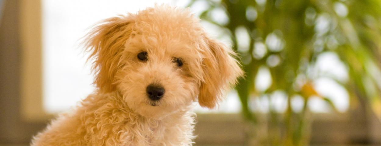 一般社団法人シルバーわんこジャパン 犬の保護チャリティー